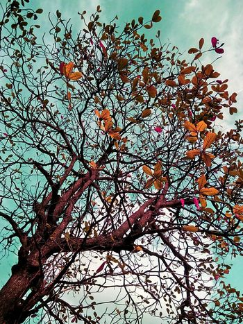 Tree Tree Photography Tree_collection  Tree Colors Colorful Tree Creative Color Creative Color On Leaves Nature Nature Photography Low Angle Shot Tree View Low Angle