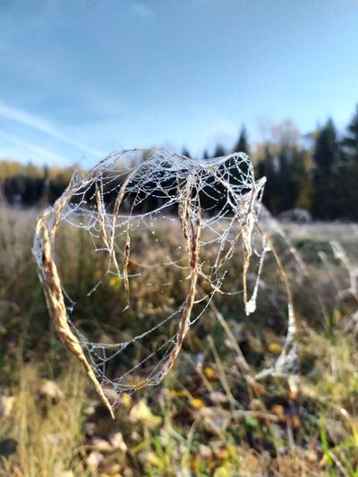 Close-up of spider web on field