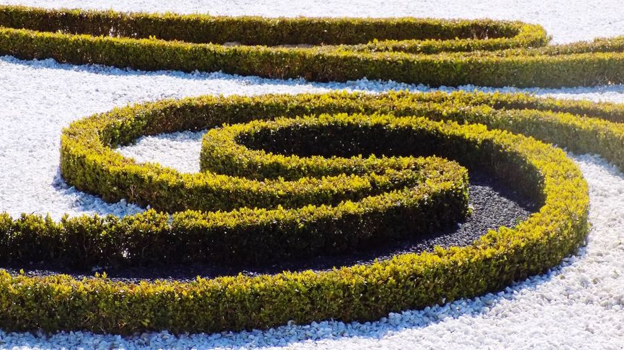 High Angle View Of Hedges