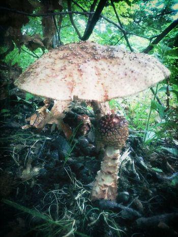 Massive Mushrooms