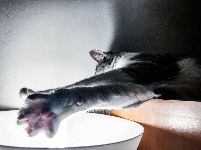 Cat Lights Cat