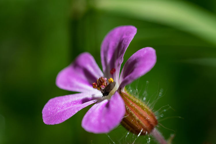 Close-up of purple pink flower