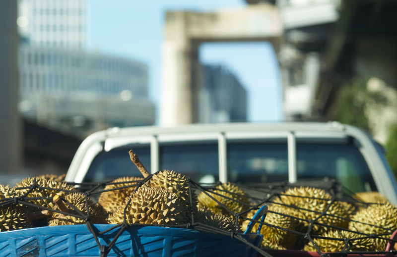 Close-up of durians transport in car