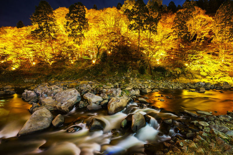 autumn night at toyotashi, aichi, Japan. Autumn Autumn Collection Autumn Colors Autumn Leaves Photoshoot Travel Travel Photography Autumn🍁🍁🍁 Daylight Photo