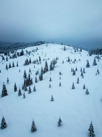 Snow Cold Temperature Winter Beauty In Nature Covering Tranquil Scene Scenics - Nature Tranquility Plant Nature Sky Tree White Color No People Landscape Environment Field Day Frozen Outdoors Tree Aerial View Dronephotography Mountain Nature
