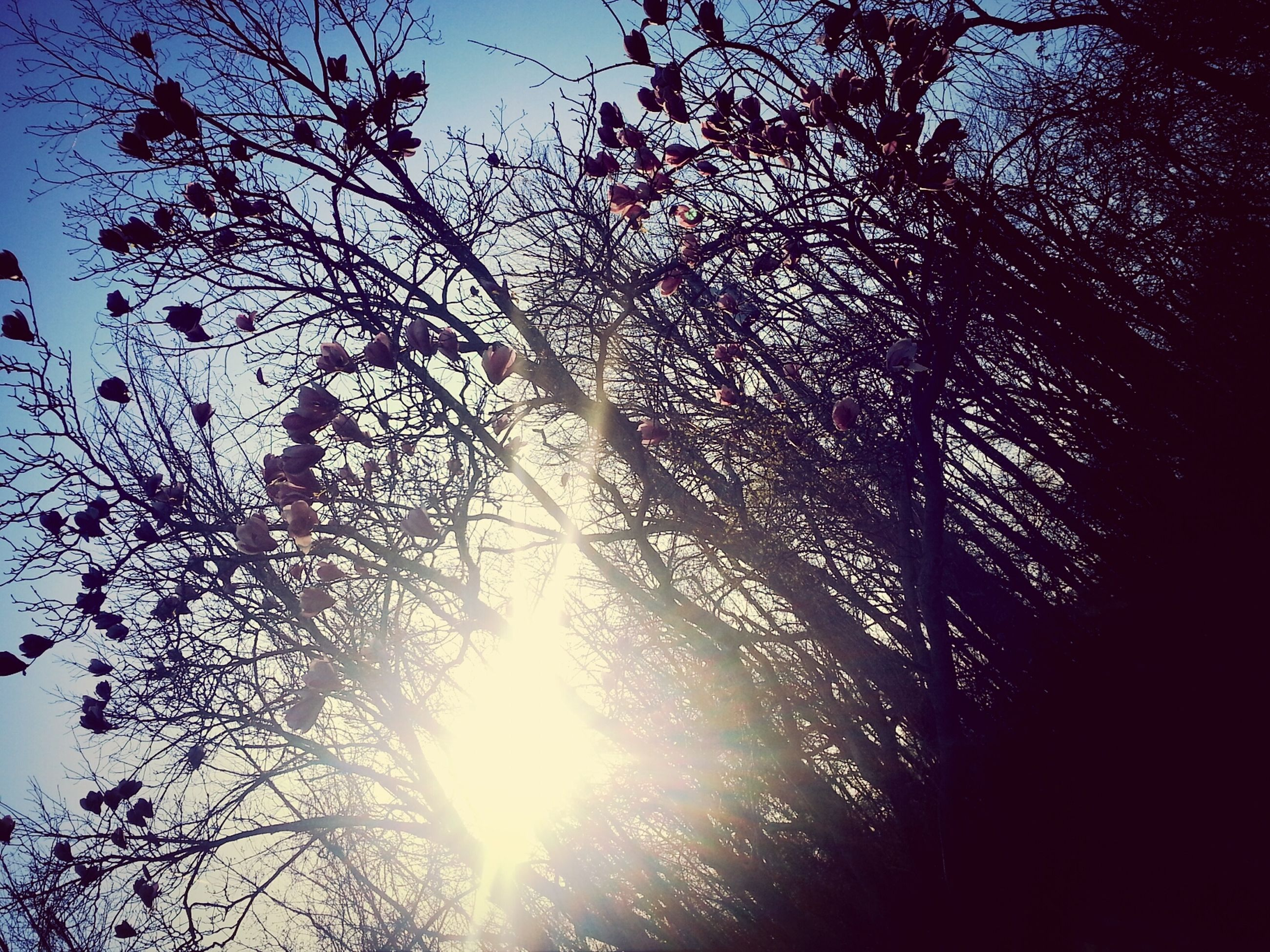 tree, low angle view, branch, silhouette, sky, bare tree, nature, growth, sun, tranquility, beauty in nature, sunlight, sunset, scenics, outdoors, no people, dusk, sunbeam, tranquil scene, clear sky