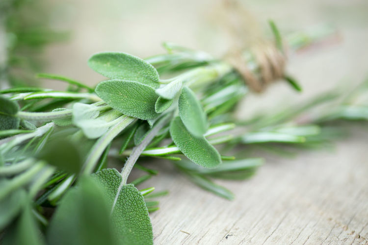 herbs Herbs InFusion Rosemary Sage Close-up Day Health Healthcare And Medicine Healthy Healthy Eating Healthy Food Herbal Nature No People Pepper Savory Savory Food
