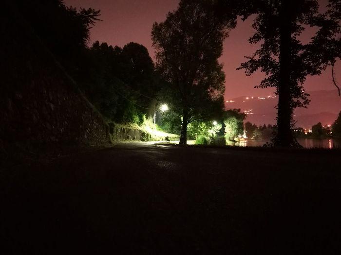 Tree Night Silhouette Nature Outdoors