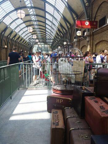 Owl Harrypotter Train Station Theme Park Wingardiumleviosa Hedwig Hogwarts