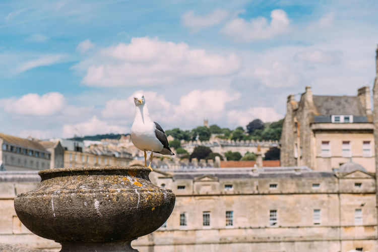 Bath Children London Animal Bird Cute Focus On Foreground Fujifilm Outdoors People Pet Seagull Streetphotography Summer