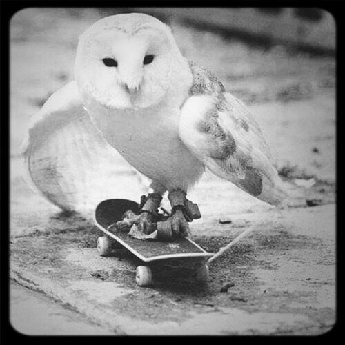 Hiboux Skateboarding