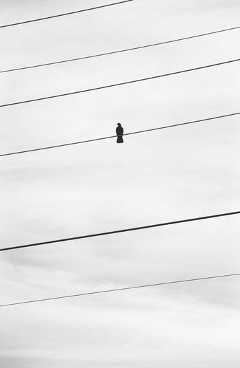 Bird On A Wire Copy Space Powerlines Quiet Simple Things In Life Simple Moment Beauty In Nature Blue Book Cover Minimal Minimalism Simple Single Sky