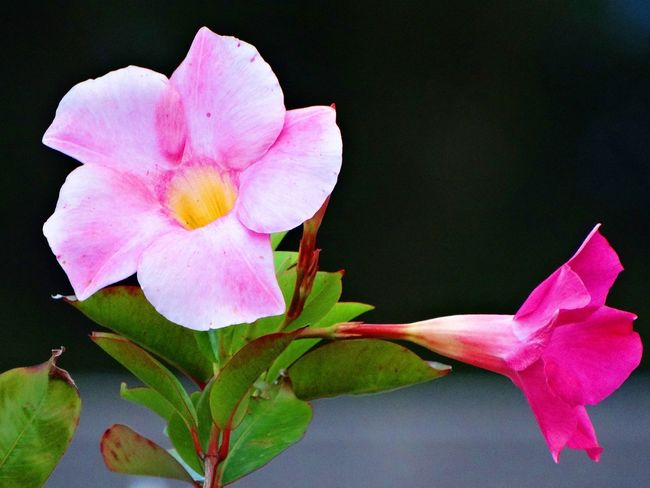 Beautiful Beauty In Nature Day Flower Flower Head Mix Yourself A Good Time Nature Pink Color Plant
