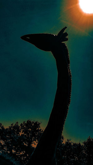 Silhouette Sky Outdoors Wildlife Wildlife Photography Giraffe Animal Trees Treeline Sun Sunlight Creativity Creative Photography StillLifePhotography Nature Me, My Camera And I Mobilephotography Naturesbeauty Beauty In Nature Refraction Photographyart Creativephoto Creative Photoart Scenic