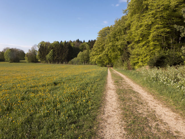 Agriculture Albsteig Footpath Hiking Dirt Road Environment Field Forest Grass Growth Hiking Trail Land Landscape Outdoors Plant Road Rural Scene Scenics - Nature Schwäbische Alb Sky Springtime Tranquil Scene Tranquility Transportation Tree