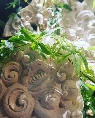 Close-up Freshness Green Color Green Sculpture Growth Healthy Eating Indoor Garden Leaf Plant Sculpture Wall Plant