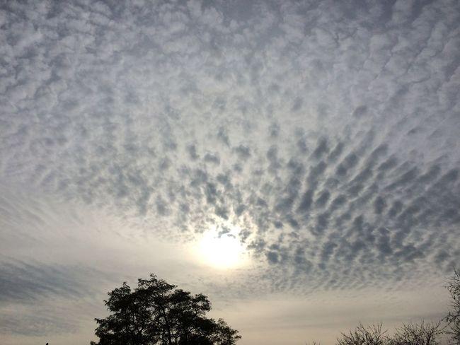 Clouds And Sky Skyporn Sky And Clouds Sky_collection Clouds Cloud_collection  Cloudporn Autumn🍁🍁🍁 Autumn Fall_collection Sun_collection Sun Sunphotography No Edit/no Filter No Filter