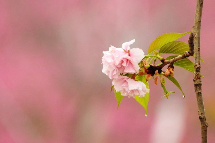 Flower Fragility Insect Beauty In Nature Nature Freshness Pink Color Petal One Animal (null) Growth Animal Themes Close-up Animals In The Wild Plant Flower Head Blooming Outdoors Pollination No People Day