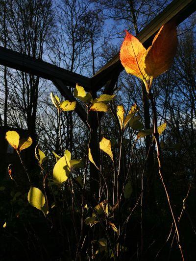 Sunshine and