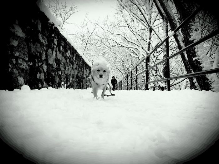 Snow Dog Parconazionaledabruzzo Freedom Bleck & White Children Only One Person Child People Fun Full Length