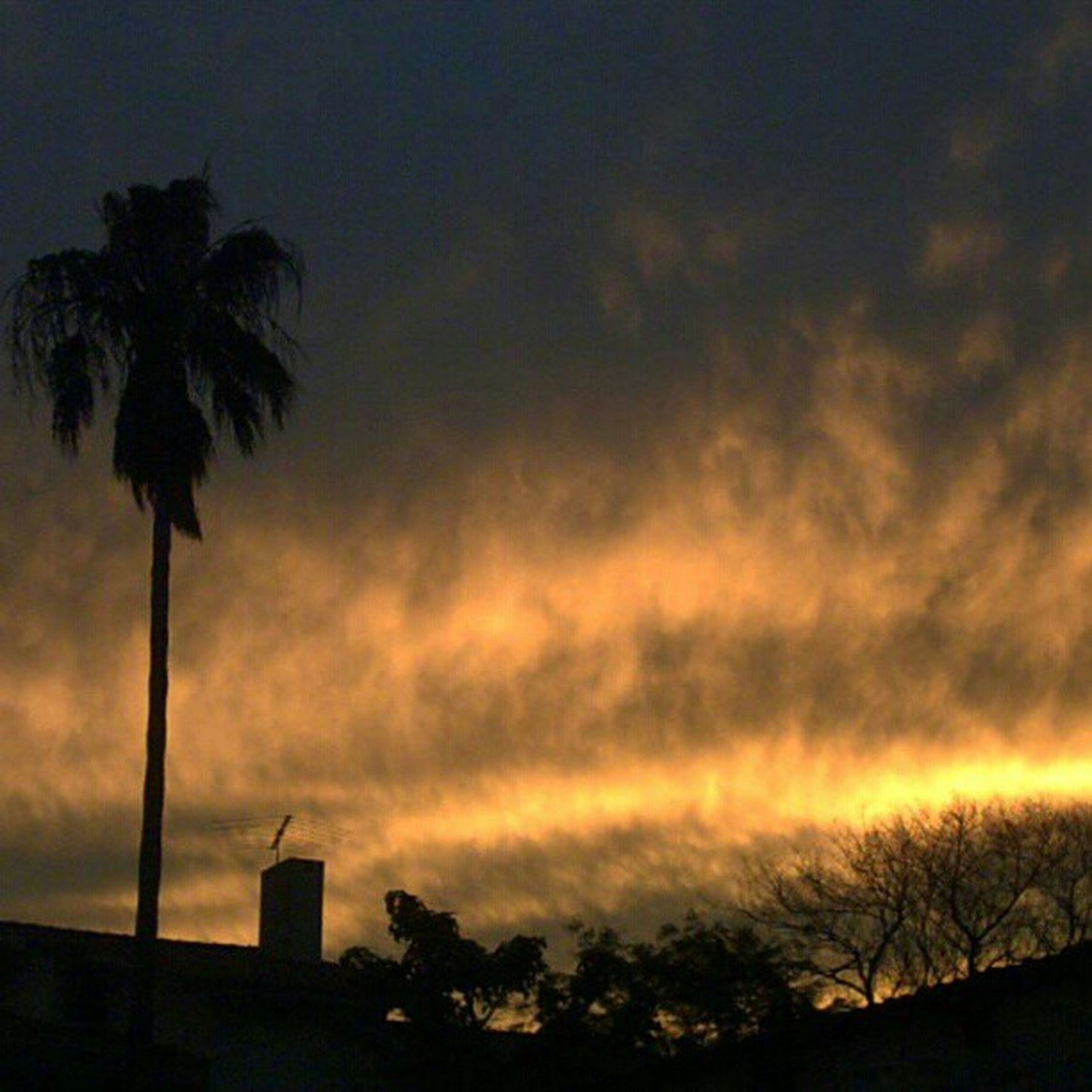 sunset, silhouette, sky, tree, palm tree, low angle view, cloud - sky, beauty in nature, orange color, scenics, nature, dramatic sky, tranquility, street light, dusk, cloudy, tranquil scene, cloud, built structure, building exterior