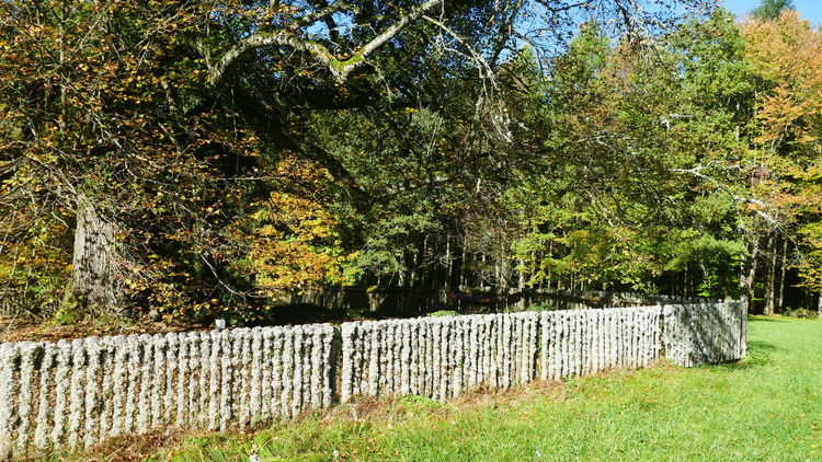 Garden Fence Barrier Beauty In Nature Boundary Built Structure Day Grass Green Color Growth Land Nature No People Outdoors Plant Scenics - Nature Stone Wall Sunlight Tranquil Scene Tranquility Tree Wall Wood Fence