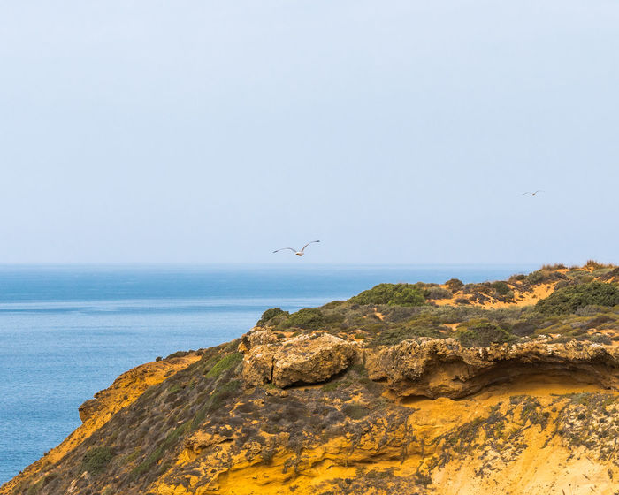 Landscape_Collection Nature Nature Photography Portugal Rock Travel Travel Photography Traveling Beauty In Nature Bird Cavaleiro Cliff Horizon Over Water Landscape Landscape_photography Nature_collection Naturelovers Ocean Photography Scenics - Nature Sea Seagull Sky Travel Destinations Water