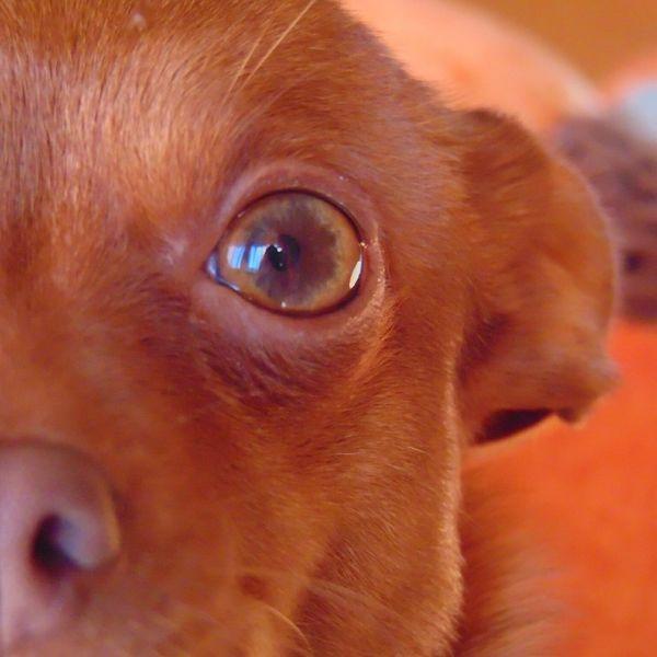 Eye Dog Eye My Dog <3 Dog Love Eye Collection