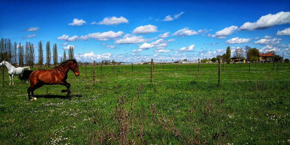 Gallop Spring Has Arrived Dramatic Sky EyeEm Nature Lover Tranquil Scene Blue Sky Clear Sky Bologna, Italy Green Color Clouds And Sky Horses Freedom Strength Sky Grass Cloud - Sky Paddock Herbivorous Working Animal Horseback Riding Horse Ranch