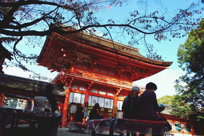 Traveling Kyoto,japan 下鴨神社