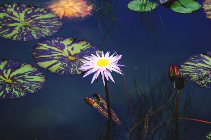 Sometimes against all odds, against all logic, we still hope. Flower Fragility Beauty In Nature Nature Water Daisy Outdoors Vizcaya