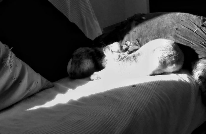 Waking up Bunny  Yawing Mammal Pets Monochrome Photography Light Contrast Stretching Out