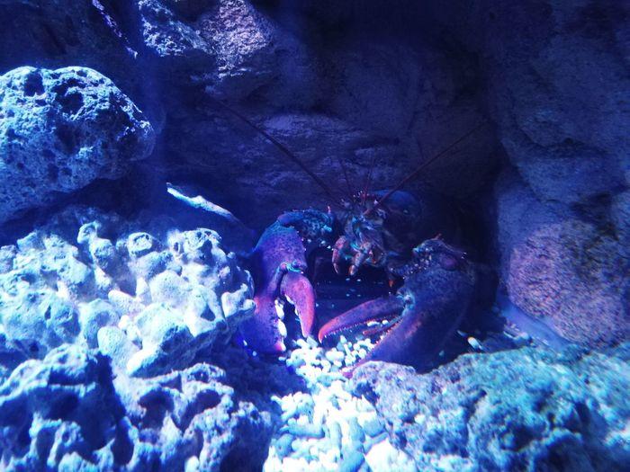 St. Petersburg, Russia Underwater World Oceanarium Oceananimals Eye4photography  Animal Themes Water
