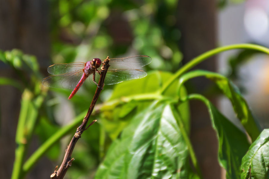 EyeEm Nature Lover EyeEm Best Shots Pink Pink Color Insect Macro Macro Photography Green Green Color Wildlife Nature Nature_collection Nature Photography Outdoors Outdoor Photography Libelula Nikon NIKON D5300 Damselfly Leaf Insect Animal Themes Close-up Plant Green Color Mosquito Flower Head