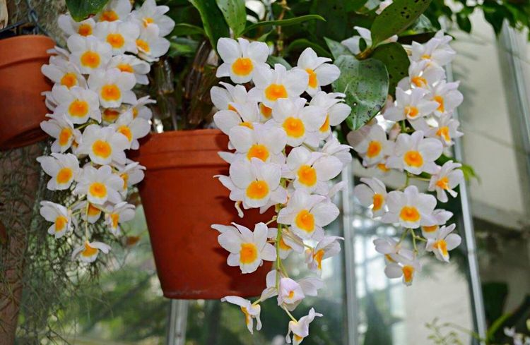 Flower Flowerporn Flower Collection Flowers,Plants & Garden Flowers, Nature And Beauty Flower Photography Flowercollection Flowers White Flower White Flowers Flowers_collection Flowerpower Nature Nature_collection Nature Photography