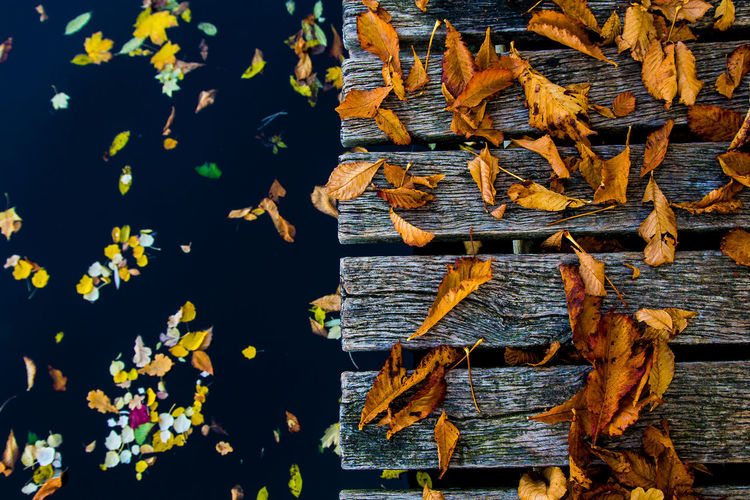 High angle view of leaves in lake