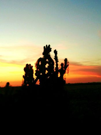 The Essence Of Summer Nature_collection Colour Of Life Sunset Silhouettes CHWYLWY