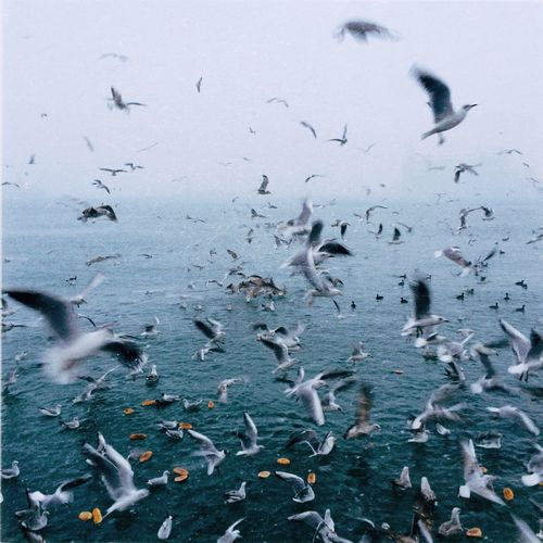 Close-up of seagulls flying over sea against sky