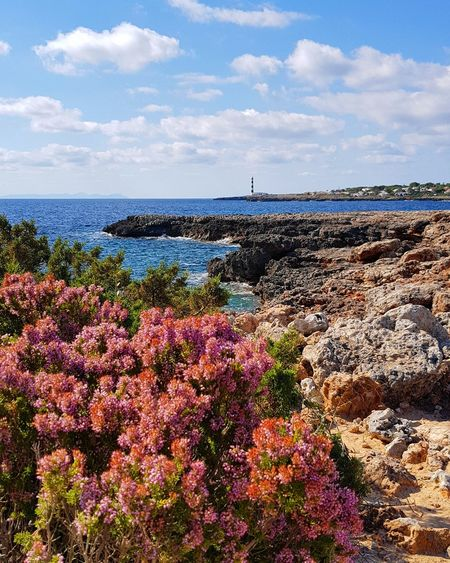 Sea Beach Flower Horizon Over Water Outdoors Sky Cloud - Sky NatureWave No People Tranquility Sand Scenics Seascape Menorca _ Spain España🇪🇸 Beauty In Nature Day Water Vacations Lighthouse Photography Coastline