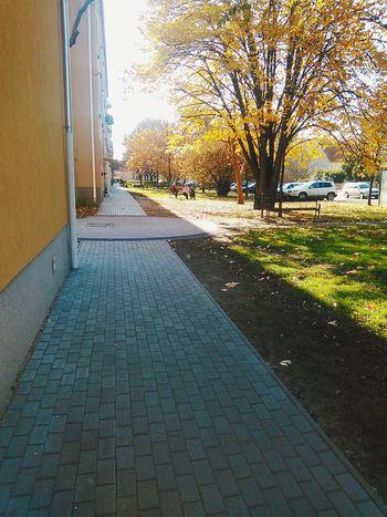 Napsütés, ősz.