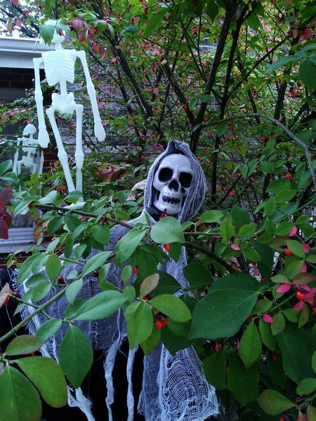 Happy Halloween! Halloween Halloween Horrors Halloween Decorations Growth No People Outdoors Tree Day Nature Close-up