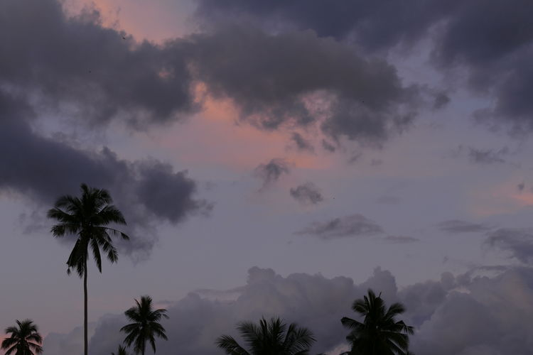 Tree Palm Tree Silhouette Sky Tropical Climate Plant Scenics - Nature Cloud - Sky Beauty In Nature No People Nature Low Angle View Growth Outdoors Coconut Palm Tree Sunset Tranquility Moody Sky Atmospheric Mood Dramatic Sky Stormy Skies Koh Samui Thailand Skyscape Clouds And Sky Tranquil Scene