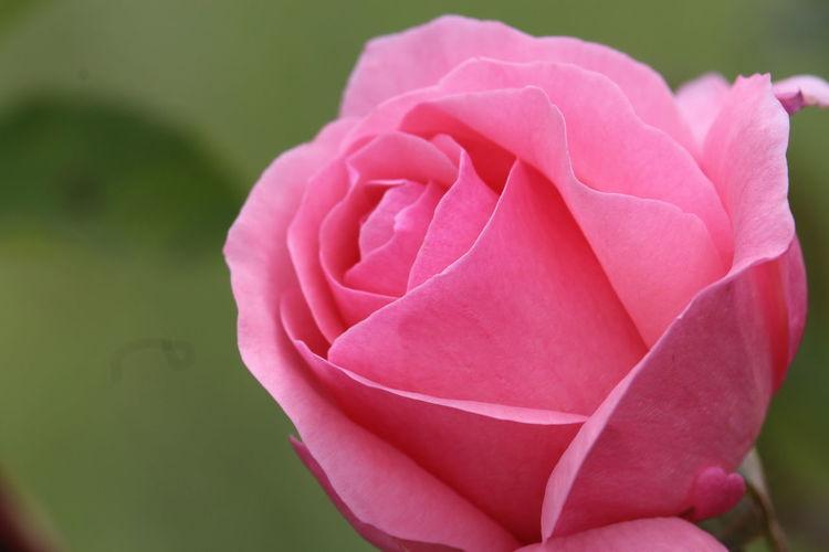 🌷 Galicia Rosé
