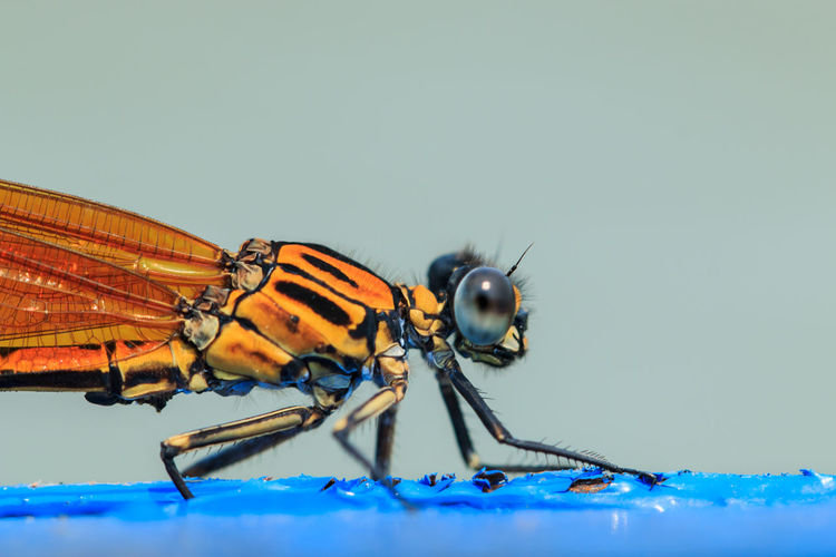 Close-Up Side View Of An Insect