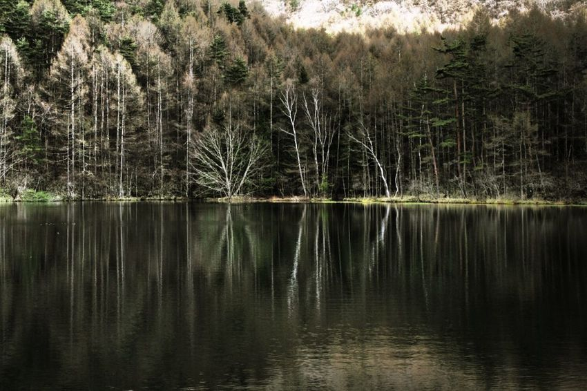 Stillness / Deep forest pond Landscape EyeEm Water Shots Water_collection Water Reflections EyeEm Nature Lover EyeEm Best Shots - Landscape EyeEm Best Shots - Nature ISOPIX Dedicate To @intreccio Nature