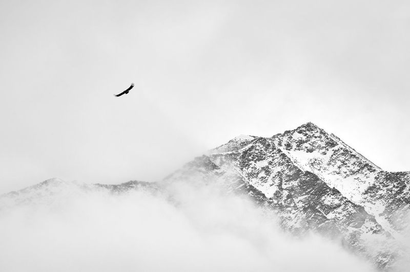 Snow mountain, bird, sky, flying China Landscape Mountain Sky Beauty In Nature Scenics - Nature No People Nature Day Snow Snow Mountain Fog Cloud - Sky Cloud Bird Travel Freedom Snowcapped Mountain Vertebrate Flying Animal Themes Animal One Animal Tranquil Scene Animal Wildlife Animals In The Wild Cold Temperature Outdoors Mountain Peak