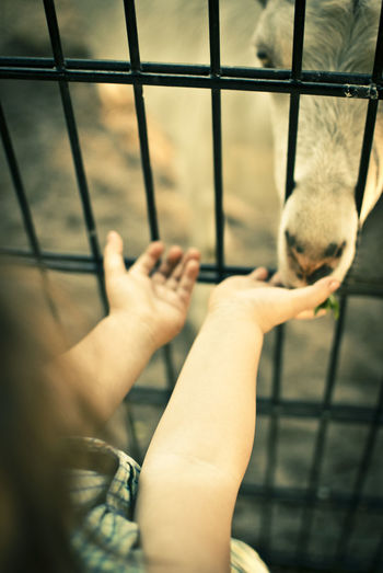 #bonding #feedingtime Animal Themes Cage Close-up Day Domestic Animals Human Body Part Human Hand Human Leg Indoors  Leisure Activity Metal One Person People Pets Real People Trapped Window