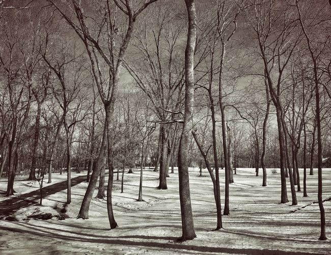 The FOREST of SOULS ~ Clay County Missouri ~ NEM Landscapes Dreamscapes & Memories Magic ForestForest Of Lost Soulsls Recurring Dream Landscape Dreamscapes Stopping Time Beautiful Mysterious Further Down The Rabbit Hole. Journey Into The Dark It Was Only A Dream