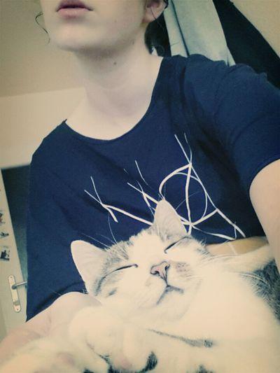 I Love This Cat ! :) Cat Cute Cat Me And Cat
