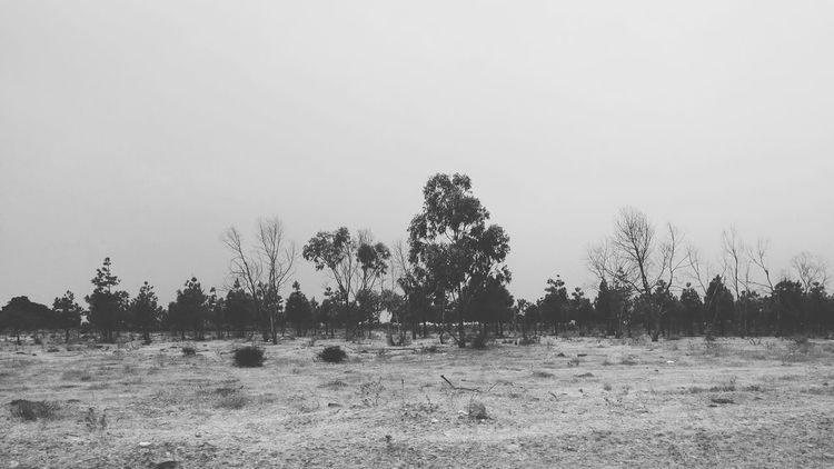In the Wild???Blackandwhite Monochrome Streetphotography Urban Nature Forest In The Forest On The Road Shootermag VSCO